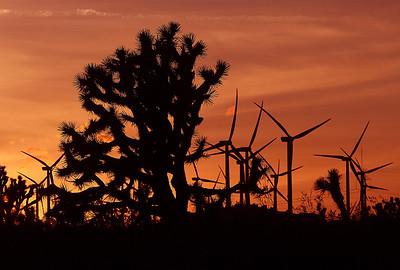 20121121_Mojave_5328