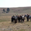 The cowboys of South Dakota - All spurs and chaps!!!