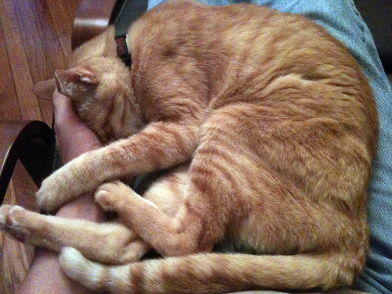 September 2012. This is one of the evil cats that rule our lives. Hobbes turned 19 this year (that's over 90 is cat years). He's a doddering old fool who is never happy unless he's pinned Matt to the living room chair so he can get a lap to warm his creaky old bones.
