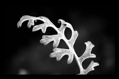 Mono Leaf