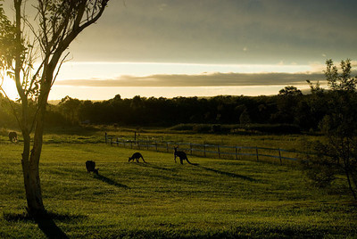 201203 - Hunter Valley & BNE
