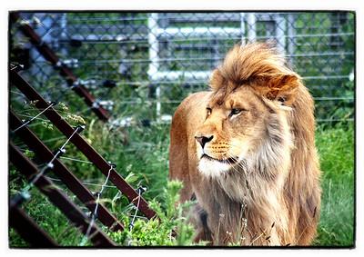 20120623 Lion
