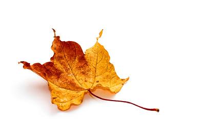 20120925 Leaf