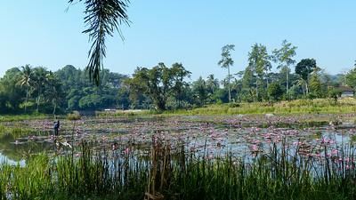 In de buurt van de Candi Cangkuang tempel