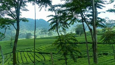 Op weg naar Bandung
