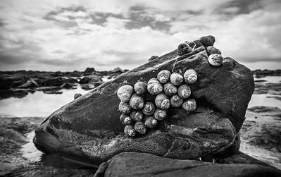 Snails on a Rock