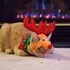 Reindeer Kitties 022