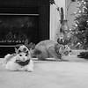 Reindeer Kitties 010