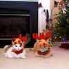 Reindeer Kitties 006