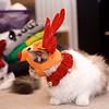 Reindeer Kitties 014