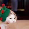 Reindeer Kitties 024