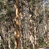 Boranup Forest, Margaret River, Western Australia