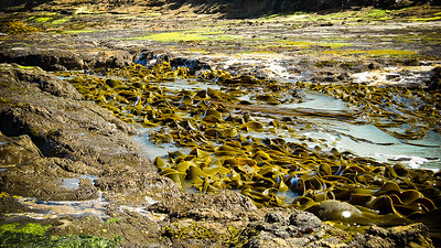 Seaweed at Curio Bay