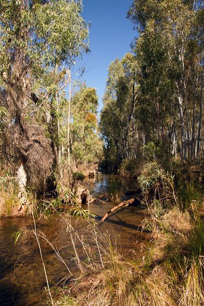 The creek at Weeli Wolli