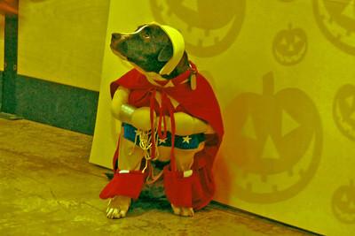 07 Wonder Woman winner of Petsmart costome contest Halloween 2010