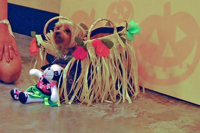 08 2010 Petsmart Halloween