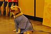 04 2010 Petsmart Halloween