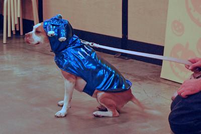 11 2010 Petsmart Halloween