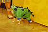 03 2010 Petsmart Halloween
