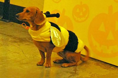 05 2010 Petsmart Halloween