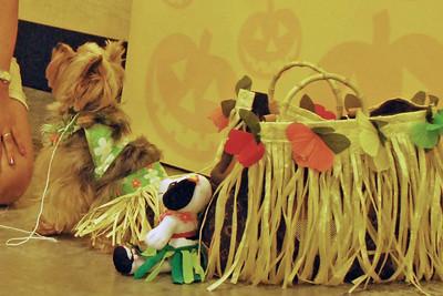 10 2010 Petsmart Halloween