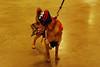 14 2010 Petsmart Halloween