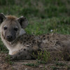 The Hyena sat up to take a look at us.