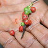 Durng our spice tour, the guide explained to us how black and red pepper is produced.