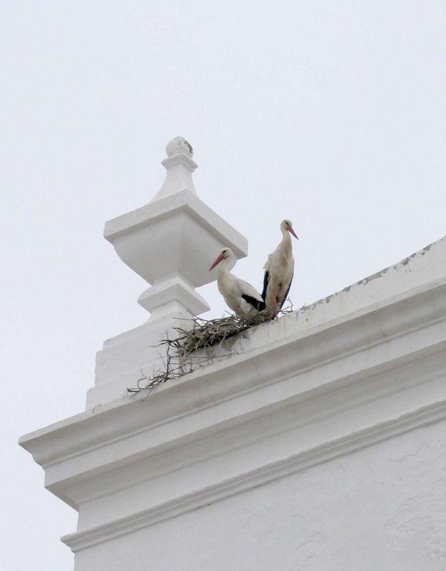 Ooievaarsnest op Igreja Matriz de São Pedro in Faro