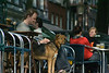 Traveling along the canals in Amsterdam, caught this vigilant guide dog watching the passers by, owner reading... outside a cafe.