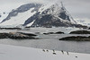 Antarctic Cruise - Day 6 - Yalour Islands - Landing - Adelie Penguins  With Bay Backkdrop