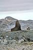 Antarctic Cruise - Day 6 - Yalour Islands - Landing - Seals 1
