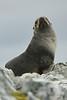 Antarctic Cruise - Day 6 - Yalour Islands - Landing - Seals 3