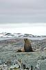 Antarctic Cruise - Day 6 - Yalour Islands - Landing - Seals 2