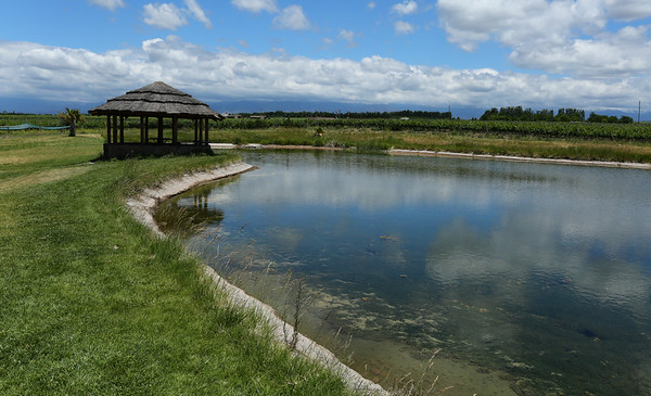Melted snow from the Andes is captured in lakes which are then used to water the vineyard. Contrary to popular belief they don't need a lot of water and prefer more arid soil.