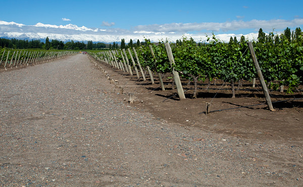There are 3 main areas where you can visit wineries around Mendoza: Uco Valley, Lujan de Cuyo and Maipu. First two are considered to have higher quality wineries and we started from Uco Valley.