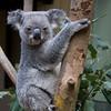 Australia (09) by Ronald Bradford - Admiring Creation