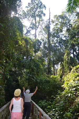 Back on Sandakan from Turtle Island
