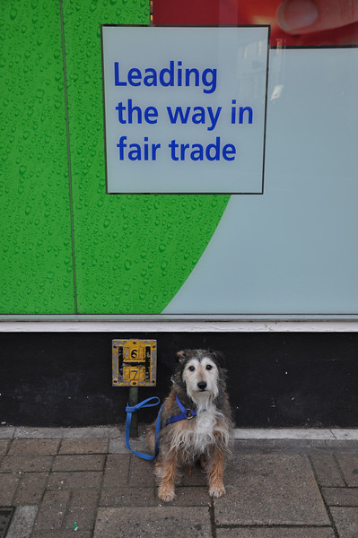 Battle Supermarket: A dog is a middleman's worst friend. Does anyone get a good deal here?