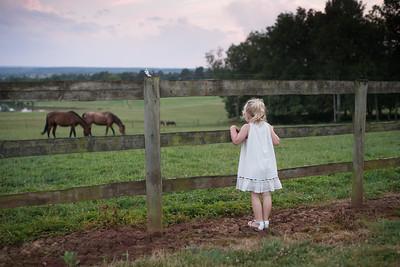 chateau d'ygrande horses