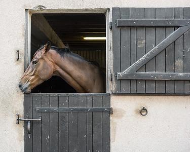 cheval chateau d'ygrande