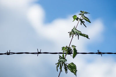 barbed wire and sky background