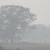 Fog. Deer. Landscape.