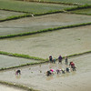 Rice farmers. Onroute to Paro from Wangdue.