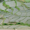 Paddy fields- Onroute to Paro from Wangdue.