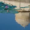 Lotus pond- Cenotaphs - Bikaner.