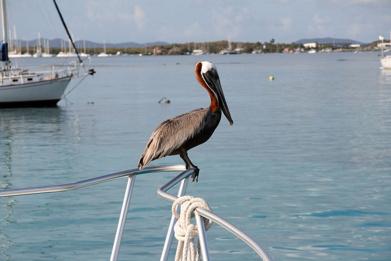 Pelican on the bow of Sea Cat