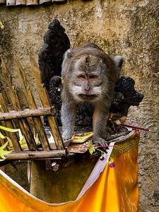 Monkey in the hotel garden