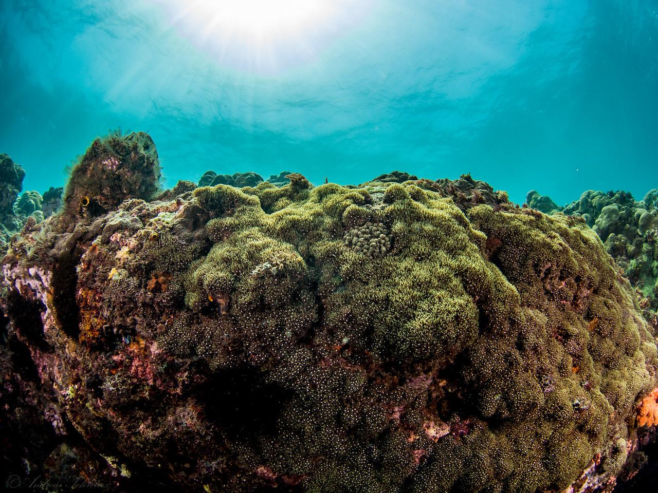 Sunrays, Teluk Karang Bondalem