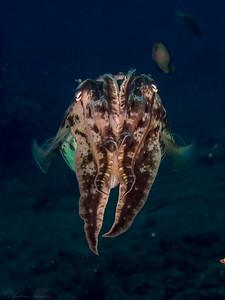Speia 1, Teluk Krang Hausriff